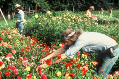 Carmel_029_1979_X_X_apprentices-working-in-the-garden_photo-courtesy-The-Chadwick-Society