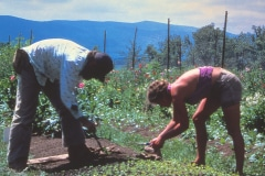 Carmel_030_1979_X_X_apprentices-working-in-the-garden_photo-courtesy-The-Chadwick-Society