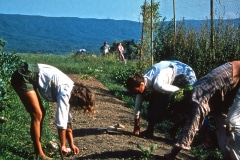 Carmel_032_1979_X_X_apprentices-working-in-the-garden_photo-courtesy-The-Chadwick-Society