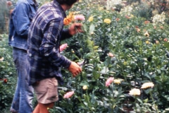 Carmel_034_1979_X_X_apprentices-working-in-the-garden_photo-courtesy-The-Chadwick-Society