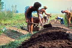 Carmel_038_1979_X_X_apprentices-working-in-the-garden_photo-courtesy-The-Chadwick-Society