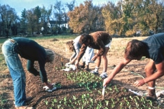Carmel_040_1979_X_X_apprentices-working-in-the-garden_photo-courtesy-The-Chadwick-Society