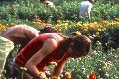 Carmel_041_1979_X_X_apprentices-working-in-the-garden_photo-courtesy-The-Chadwick-Society