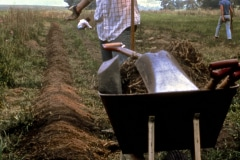 Carmel_044_1979_X_X_apprentices-working-in-the-garden_photo-courtesy-The-Chadwick-Society