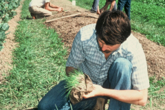 Carmel_045_1979_X_X_apprentices-working-in-the-garden_photo-courtesy-The-Chadwick-Society