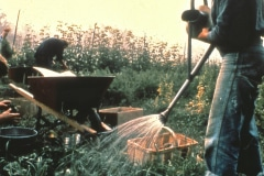 Carmel_048_1979_X_X_apprentices-working-in-the-garden_photo-courtesy-The-Chadwick-Society