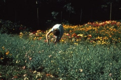 Carmel_052_1979_X_X_apprentices-working-in-the-garden_photo-courtesy-The-Chadwick-Society