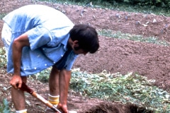 Carmel_053_1979_X_X_apprentices-working-in-the-garden_photo-courtesy-The-Chadwick-Society