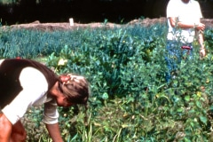 Carmel_054_1979_X_X_apprentices-working-in-the-garden_photo-courtesy-The-Chadwick-Society