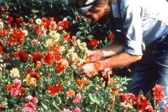 Carmel_059_1979_X_X_apprentices-working-in-the-garden_photo-courtesy-The-Chadwick-Society