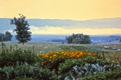 Carmel_067_1979_X_X_The-Alan-Chadwick-Virginia-Garden_photo-courtesy-of-Timothy-Fisher