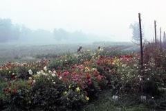 Carmel_069_1979_X_X_The-Alan-Chadwick-Virginia-Garden_photo-courtesy-of-Timothy-Fisher