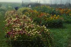 Carmel_076_1979_X_X_The-Alan-Chadwick-Virginia-Garden_photo-courtesy-of-Timothy-Fisher