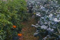 Carmel_085_-Garden-Path