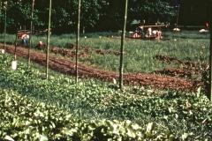 Carmel_086_1979_X_X_The-Chadwick-VA-Garden_photo-courtesy-The-Chadwick-Society