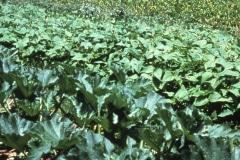 Carmel_088_1979_X_X_The-Chadwick-VA-Garden_photo-courtesy-The-Chadwick-Society