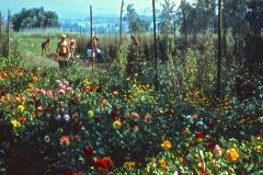 Carmel_091_1979_X_X_The-Chadwick-VA-Garden_photo-courtesy-The-Chadwick-Society