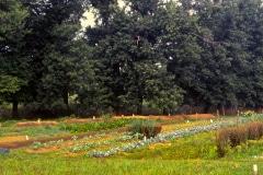 Carmel_093_1979_X_X_The-Chadwick-VA-Garden_photo-courtesy-The-Chadwick-Society