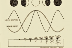 12-10-Lunar-Cycle_by-Peter-Loewer-after-Maya-Cunnan_Charts-Drawings-Graphs