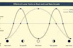 12-9-2_Moon-Cycle-Sowing-and-Transplanting-Chart_by-Ecology-Action_Charts-Drawings-Graphs