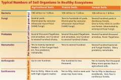 9-9-Chart_The-Soil-and-Water-Conservation-Society_used-by-written-permission_Charts-Drawings-Graphs
