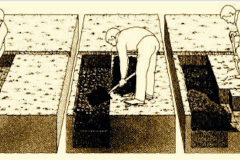 7-2-Digging-French-Intensive-Raised-Bed_From-Ecology-Action_Charts-Drawings-Graphs