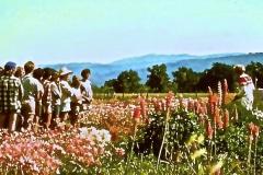 Covelo-05_1976-1977_Apprentices-working-in-Garden-various_01