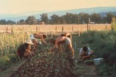 Covelo-05_1976-1977_Apprentices-working-in-Garden-various_10