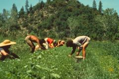 Covelo-05_1976-1977_Apprentices-working-in-Garden-various_18