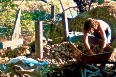 Covelo-05_1976-1977_Apprentices-working-in-Garden-various_27