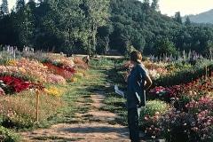 Covelo-05_1976-1977_Apprentices-working-in-Garden-various_38
