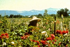 Covelo-05_1976-1977_Apprentices-working-in-Garden-various_40