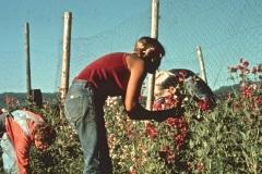 Covelo-05_1976-1977_Apprentices-working-in-Garden-various_41