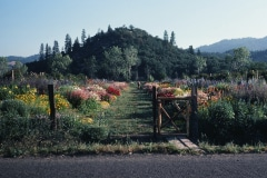 Covelo-08_The-Herbaceous-Border-Flowers_03