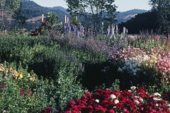 Covelo-08_The-Herbaceous-Border-Flowers_08