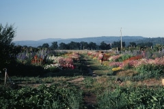 Covelo-08_The-Herbaceous-Border-Flowers_11