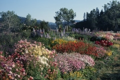 Covelo-08_The-Herbaceous-Border-Flowers_12