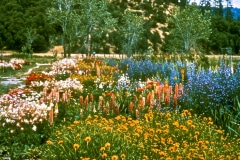 Covelo-08_The-Herbaceous-Border-Flowers_23