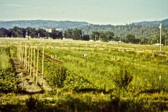 Covelo-09_1975-08-xx_Garden-Project-1975_02_courtesy-James-Ast
