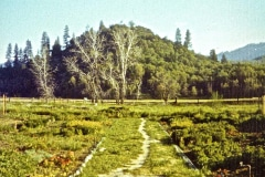 Covelo-09_1975-08-xx_Garden-Project-1975_04_courtesy-James-Ast