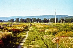 Covelo-09_1975-08-xx_Garden-Project-1975_05_courtesy-James-Ast