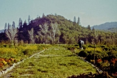Covelo-09_1975-08-xx_Garden-Project-1975_07_courtesy-James-Ast