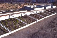 Covelo-12_GColdframes-Propagation-Various_03