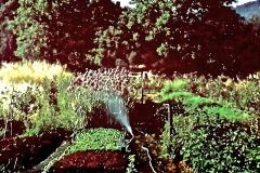 Covelo-04_04_1977_X_X_Garden-Beds_Photo-by-Richard-Joos
