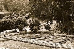 Green-Gulch_05_1972_x_x_Green-Gulch-Farm_-Original-Alan-Chadwick-Garden__courtesy-Chadwick-Society