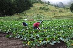 Green-Gulch_19_x_x_x_Green-Gulch-Farm_Production-Garden