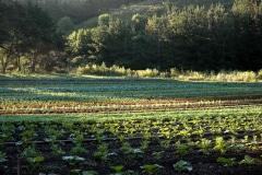 Green-Gulch_23_x_x_x_Production-Garden_