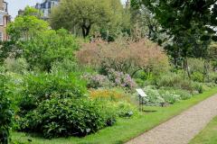 6-X_X_X_Chelsea-Physic-Garden_Medicinal-Plants_Photographer-Unkown_Alans-Garden-Influences