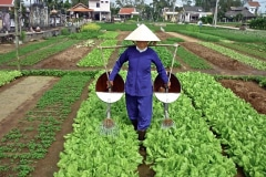 12-Chinese-Intensive-Horticulture_Intensive-Greens-Production-in-Raised-Beds_5_China_date-and-photographer-unknown_Alans-Garden-Influences
