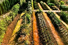 16-Chinese-Intensive-Horticulture_Peter-Chans-Garden_date-and-photographer-unknown_from-22Better-Vegetable-Gardens-The-Chinese-Way22-by-Peter-Chan_out-of-print_Alans-Garden-Influences